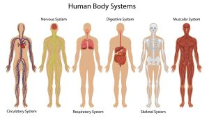 Habakkuk 3 7 Body-systems-and-organs